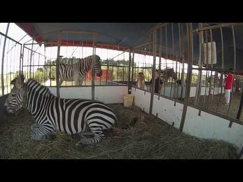 Zoo Cirque ZAVATTA