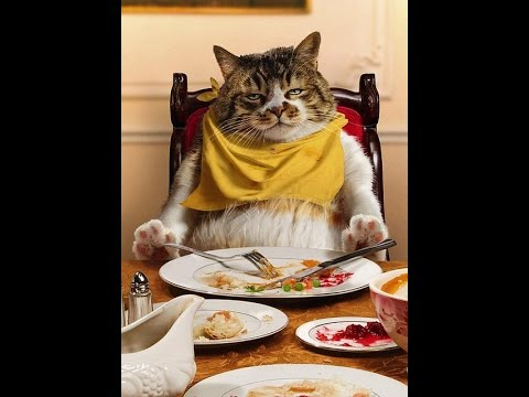 Самое смешное про котов  Лап   усики