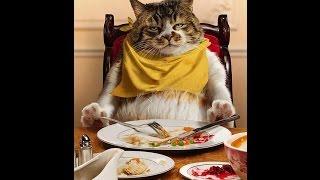Самое смешное про котов  Лап   усики!
