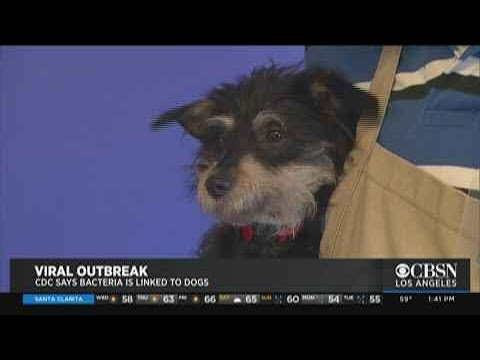 Buster - CDC says dogs could be making humans sick
