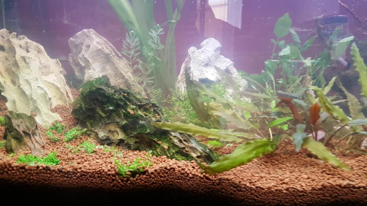 Il mio nuovo acquario da 200 litri youtube for Acquario 100 litri prezzo