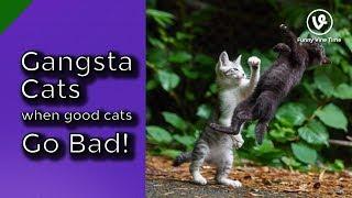 Gangsta Cats Video Compilation 2019   #1