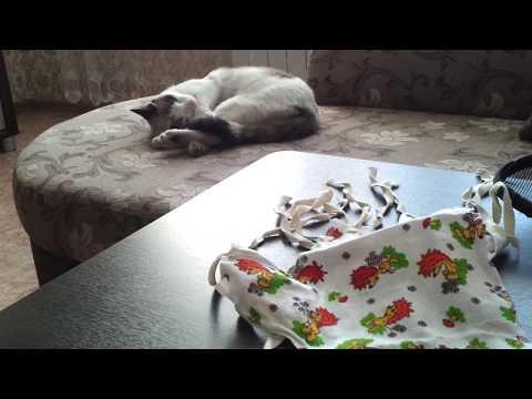 "Все ""за "" и ""против"" стерилизации кошки"