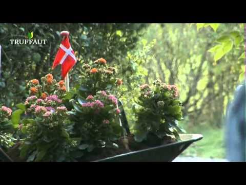 kalanchoe culture et entretien jardinerie truffaut tv youtube. Black Bedroom Furniture Sets. Home Design Ideas