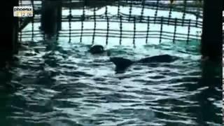 Die Reise der Delfine Reportage über Delfine Teil 1