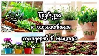 Пасынкование и подвязка  помидоров(, 2016-06-16T09:49:07.000Z)