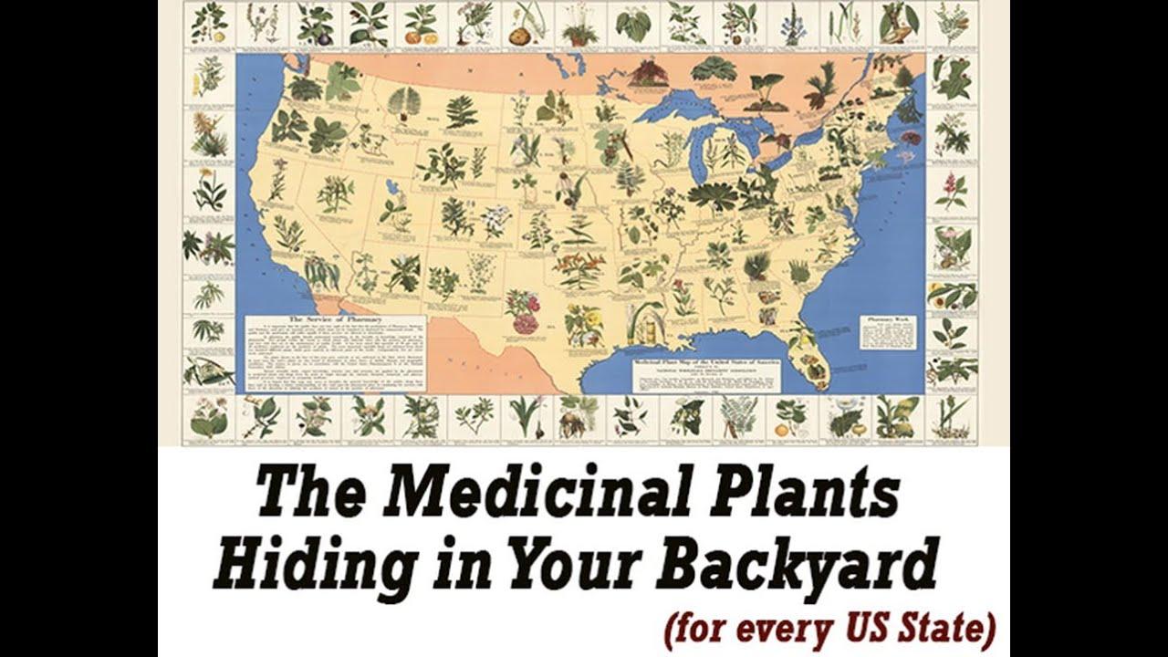 The Lost Book Of Herbal Remedies – The Best Plant Medicine Book!!! #Herbalmedicine