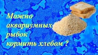 Можно аквариумных рыбок кормить хлебом ?