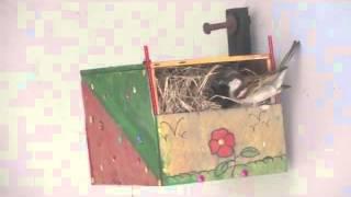 World sparrow day 2016