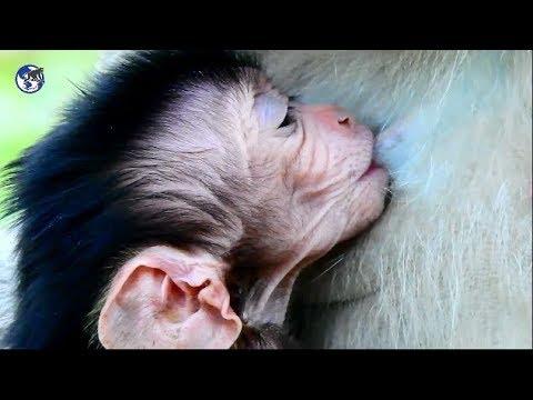 Feeding more baby . Baby Kelly still not alert. Elsa need vitamin.World Monkey.