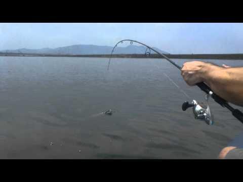 pesca de sawara