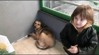 Fatih Selim marketin dışında karnı acıkmış sokak köpeğine marketten iyilik maması aldı