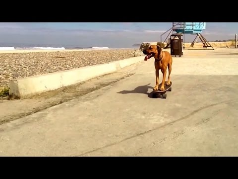 Watch This Talented Rescue Dog Skateboard Like a Pro
