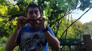 Блюз на двух основных нотах Урок № 22.How to play the blues on the harmonica. Part 2