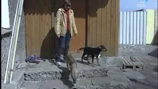 Екатеринбург - массовое «чипирование» бродячих собак