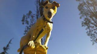 Dog Tricks | Août 2020