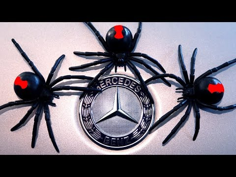 Spider Mind Games Mercedes Benz Spider Infestation Pt1 EDUCATIONAL VIDEO