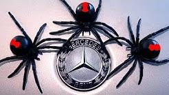 Spider Mind Games Mercedes Benz Spider Infestation Pt1 EDUCATIONAL VIDEO
