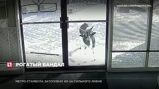 В США козел разгромил офис компании, разбив стекла входных дверей