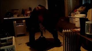 МакКартер - самый большой вес на хабе Айронмайнд