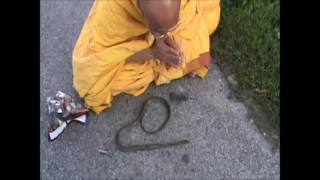 Buddhist Monk helps snake pass over to the Afterlife | Namo Amitabha