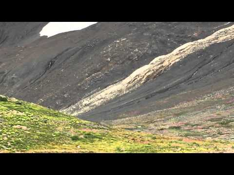 Bigfoot/Sasquatch Sighting near Squamish ( August 16, 2014 )