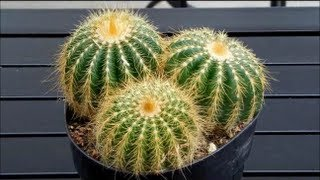 Exhibition of Cactus Family Plants - Home Gardening, Gardening Tips, Home improvement