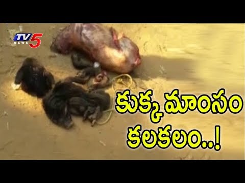కుక్క మాంసం కలకలం | 'Dog Meat' Sale In Restaurants, Krishna District | TV5 News