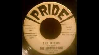 The Motivations - The Birds