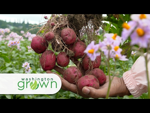 "Washington Grown Season 4 Episode 6 ""Fresh Potatoes"" with Cooking Segment"
