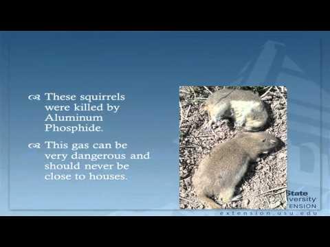 Ground Squirrel Control Methods