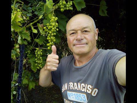 La taille de la vigne doovi - Quand tailler la vigne en treille ...