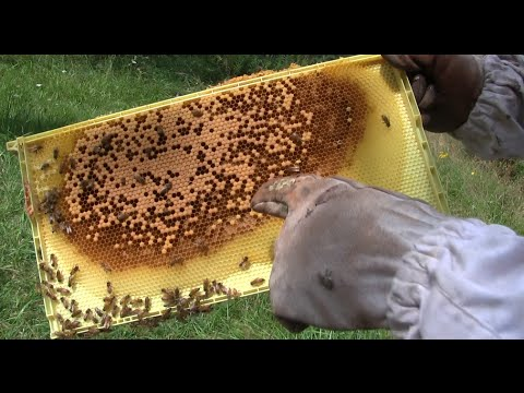 Week 10 Checkup on The Bees | MIgardener