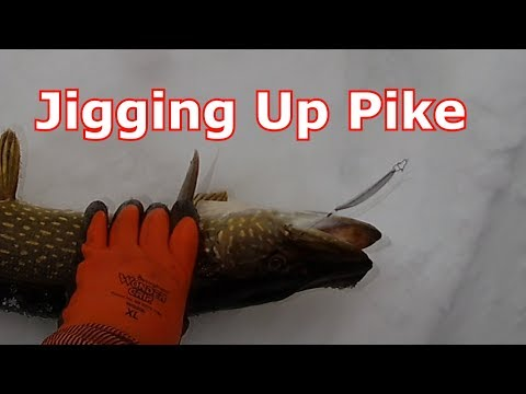 Ice Fishing Pike - Jigging With A Tricked Out Pimple