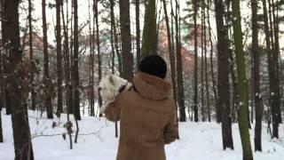 Snow - A True Westie Story