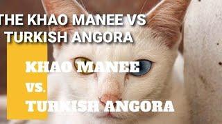 THE KHAO MANEE VS TURKISH ANGORA