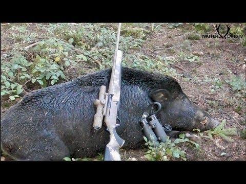 🐗Keilerjagd 2018- Hughe Medal Class Forest Wild Boar!