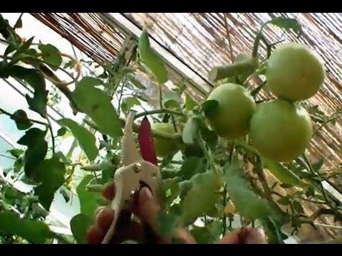faire-mûrir-les-derniers-fruits-et-légumes