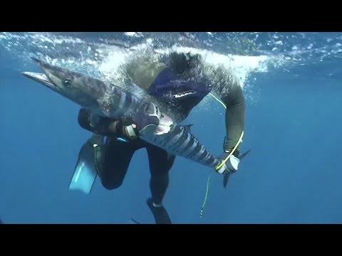 Bahamas wahoo and groupers on polespears- mini documentary