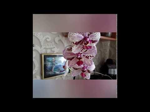 Уход за орхидеей осенью,как создать комфортные условия