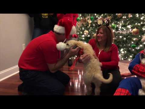 Lisa St. Regis - Dad Screams With Excitement When Surprised With Puppy He Wanted
