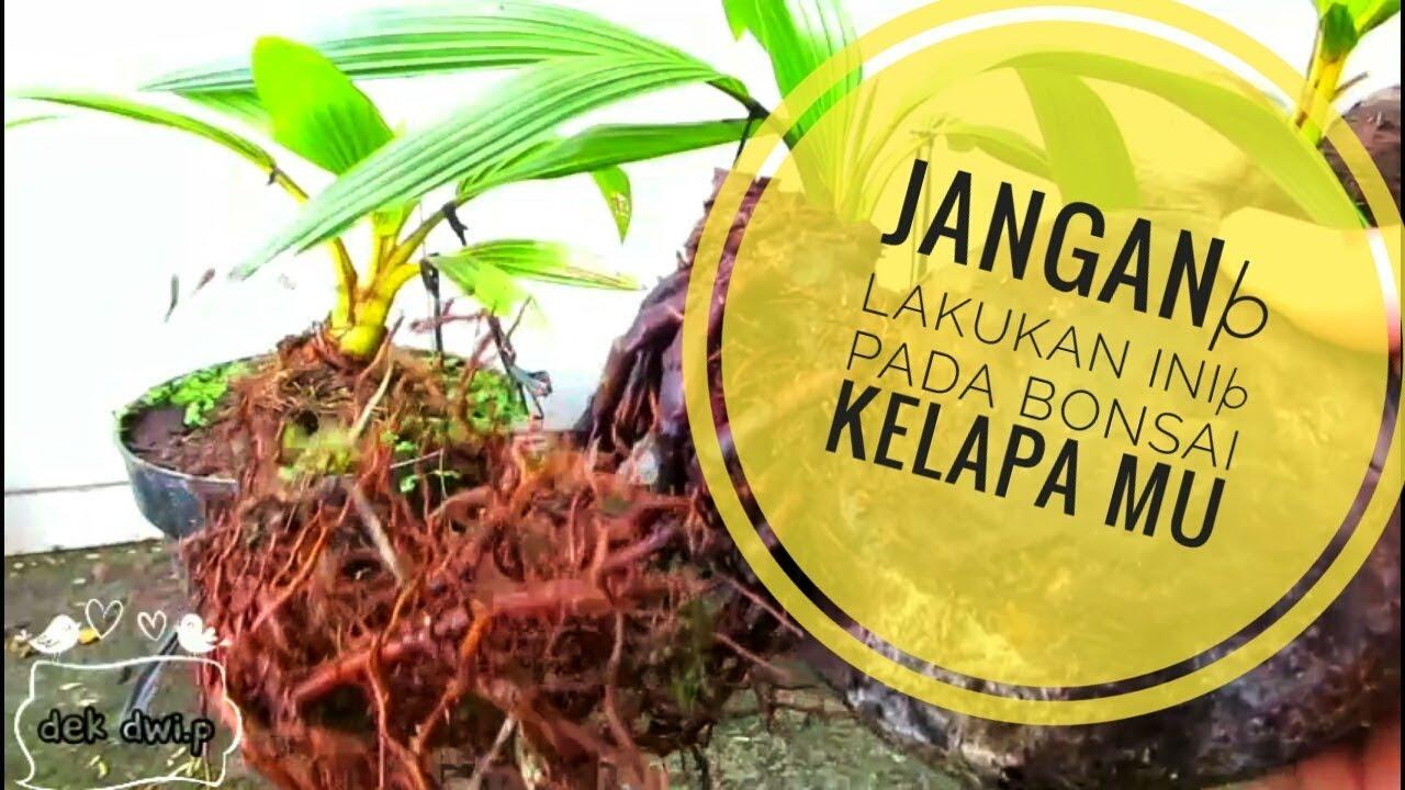 Bonsai Kelapa Dilukis Begini Jadinya Kreatifitas Tanpa Batas By Dek Dwi Payadnya