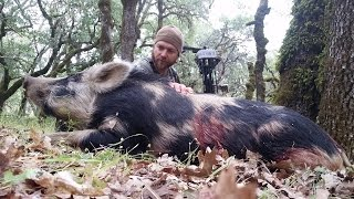 The Silent - Solo Bowhunting & Filming Wild Pigs In California.