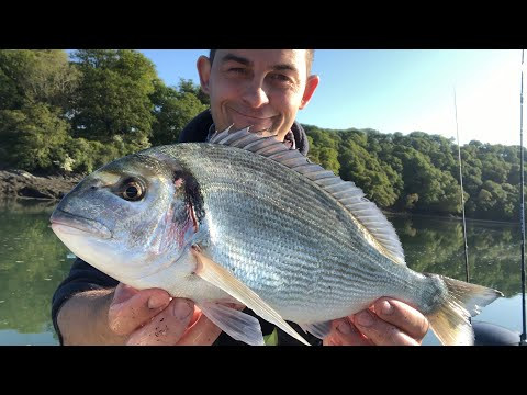 Sea Fishing UK - Gilthead Bream And Bass Fishing