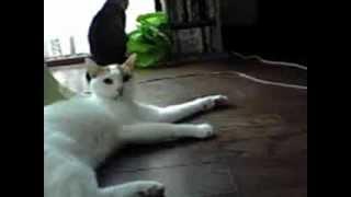 グミさん(猫)とコムギ(猫)のやりとりです。 ケンカなんだかなんだか。