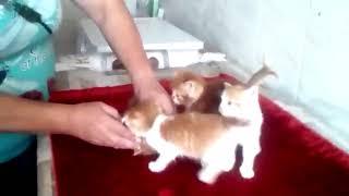 Рыжие котята в ожидании новых владельцев