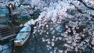 大阪・門真 砂子水路の桜 夕刻から夜桜 Cherry tree of the Sunago waterway, Kadoma Osaka (2014.4)