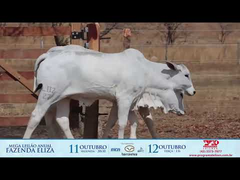 LOTE 137