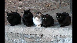 """Вышивка крестом: Обзор набора от РТО """" Среди черных котов"""""""
