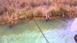 Video First Sight Fishing Solo download MP3, 3GP, MP4, WEBM, AVI, FLV Juli 2018